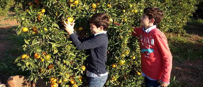 ¿Cuándo comprar las mandarinas y por que?