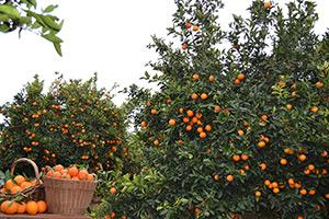 Freshnaranja.com - Tienda online de naranjas y mandarinas. Envios gratis de nuestras naranjas a domicilio