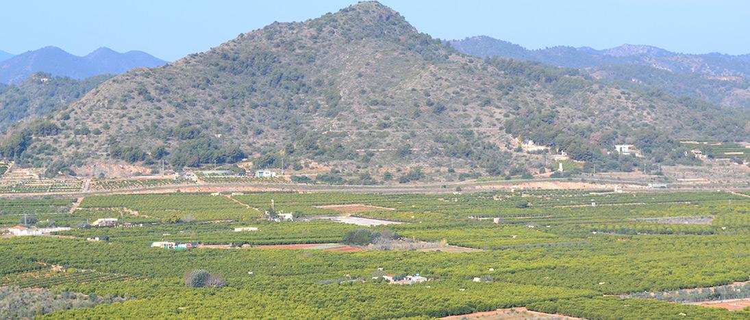 Vista panoramica huertos de naranjas y mandarinas de Freshnaranja.com