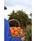 Mandarinas Marisol caja 5 kilos